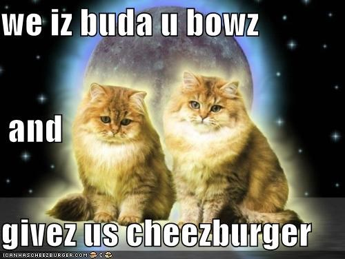 Cheezburger Image 5254841856