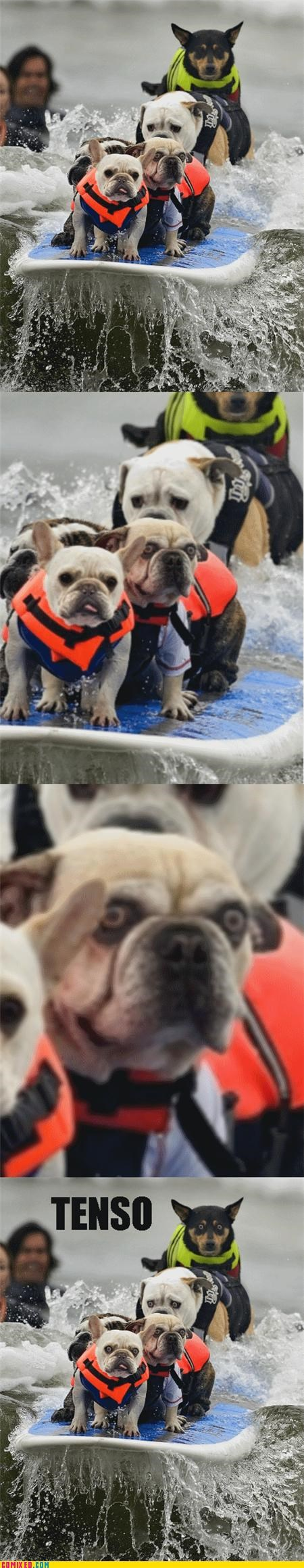 dogs having a blast not enjoyable oh god his eyes Tenso - 5255273216