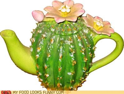 cactus,funny food photos,teapot