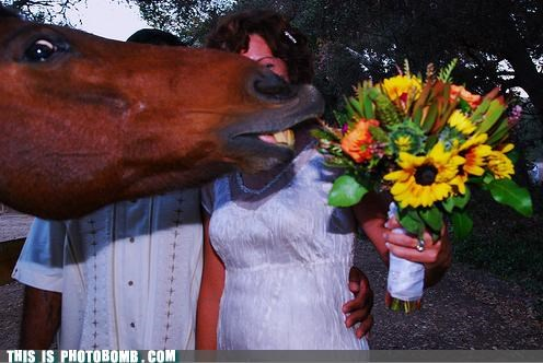 Animal Bomb best of week Flower horse imma hoers interrupt wedding