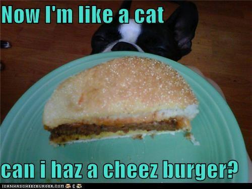 Cheezburger Image 5255615488