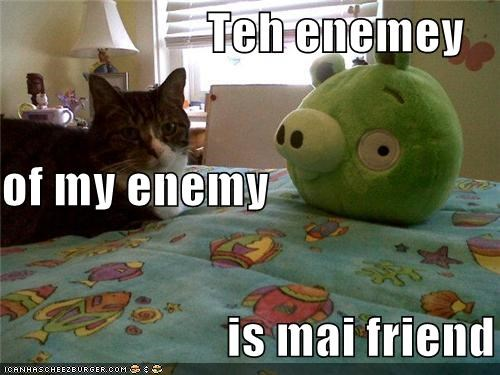 adage,angry birds,caption,captioned,cat,enemy,friend,pig,stuffed animal