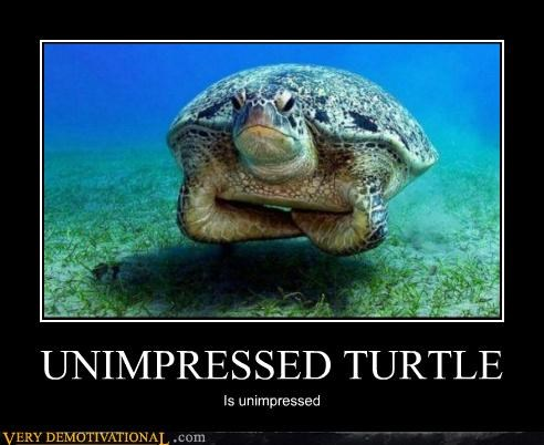hilarious turtle unimpressed - 5256258560