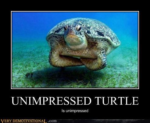 hilarious turtle unimpressed - 5256258560