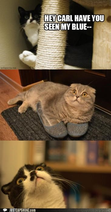 animals,Cats,cross dressing,I Can Has Cheezburger,secrets,shocked,shoes