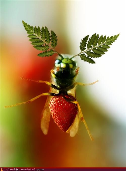 fly,fruit,photoshop,wtf