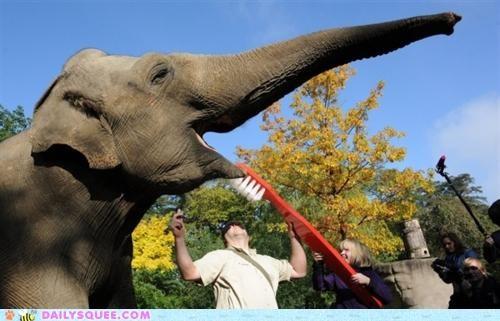 acting like animals brushing elephant giant hygiene lolwut nice smile teeth toothbrush - 5256786944