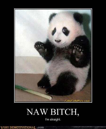 hilarious panda scared straight