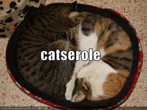 bed cuddling food lolcats sleeping - 525735680