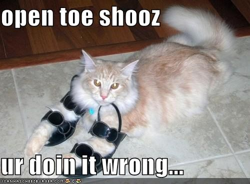 animals Cats doing it wrong FAIL I Can Has Cheezburger sandals shoes - 5257472000