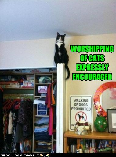 WORSHIPPING OF CATS EXPRESSLY ENCOURAGED