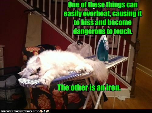 caption,captioned,cat,characteristics,comparison,distinction,iron,matching,twist