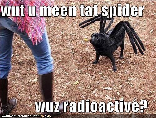 8 legs,costume,halloween,halloween costume,huh,pug,radioactive,spider