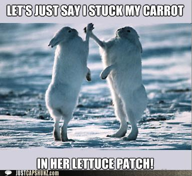 awesome bros bunnies high fives I Can Has Cheezburger innuendo rabbits score sex - 5259003648