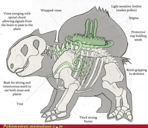anatomy best of week bulbasaur IRL Pokémon starters - 5259192576