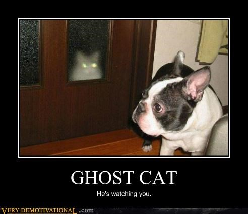 animals cat ghost hilarious - 5259267072