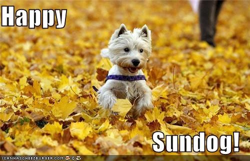 autumn fall happy happy dog happy sundog leaves outdoors running Sundog west highland white terrier - 5259670784