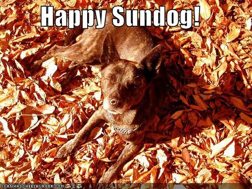 autumn happy dog happy sundog leaves sunny day sunshine whatbreed - 5259678464
