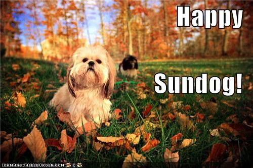 autumn,happy dog,happy sundog,leaves,outdoors,shih tzu,Sundog