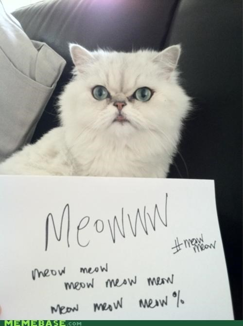 Cats hashtags Memes meow Protest Wall Street - 5259767808