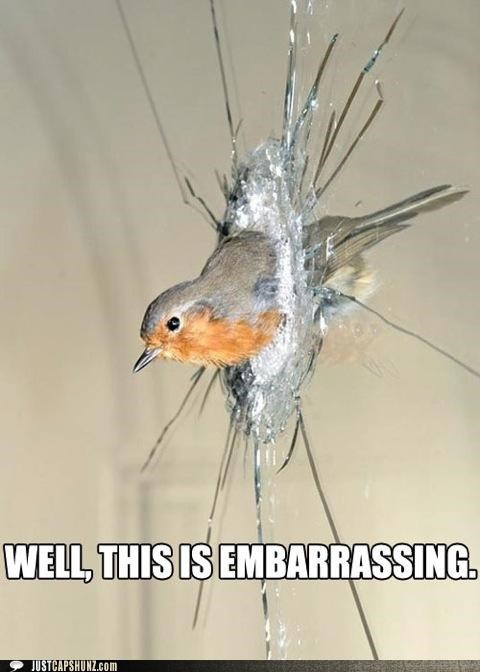 angry birds animals birds broken embarrassed embarrassing glass I Can Has Cheezburger oops windows
