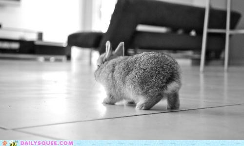 attempt,bunny,carrot,happy bunday,heist,lightly,quietly,rabbit,sneaking,sneaky,softly,theft,tread,treading,walking