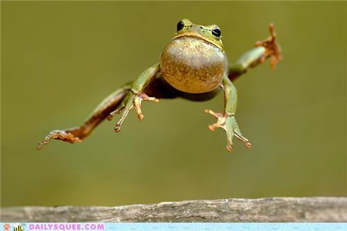 acting like animals demonstration flying frog hopping jumping karate kicking performance - 5260534528