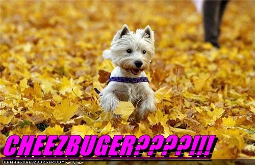 Cheezburger Image 5260550912