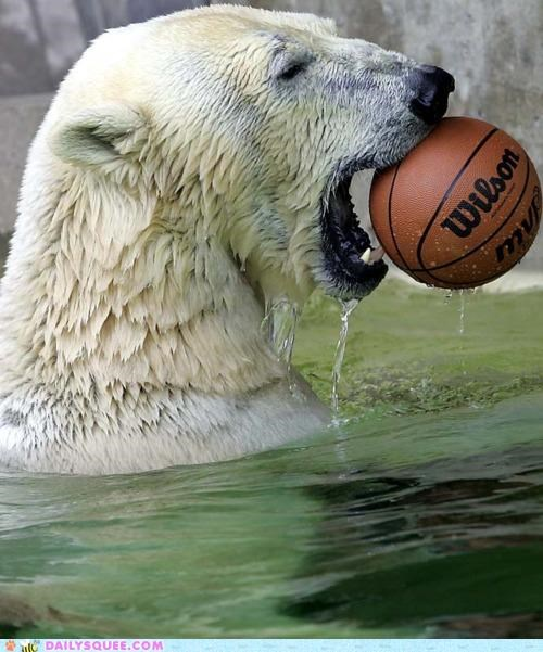 acting like animals basketball bear brussels sprout difference disappointed nomming noms polar bear unimpressed upset - 5260561152