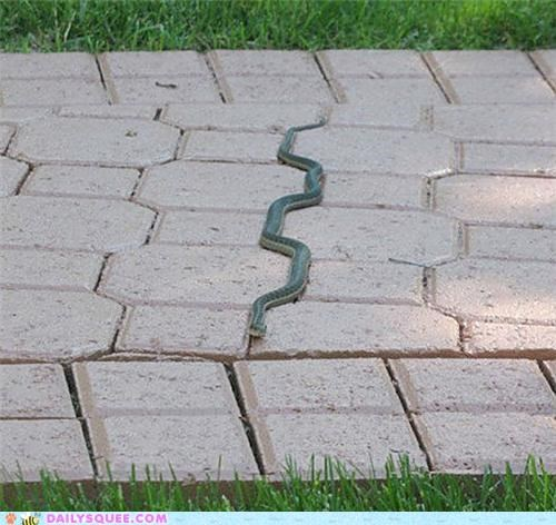 acceptance acting like animals alignment defensive Hall of Fame moving obsessive compulsive ocd precise sidewalk snake weird
