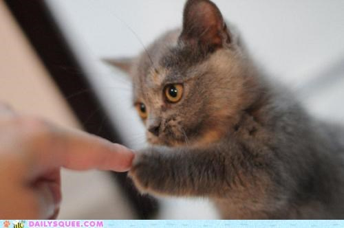 adorable baby bump cat finger fist fist bump Hall of Fame kitten pound touching