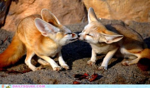 acceptable adorable fennec fennec fox fennec foxes fennecs Hall of Fame KISS kissing PDA smooch unbearably squee - 5260666112