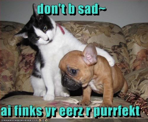 don't b sad~ ai finks yr eerz r purrfekt