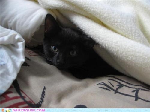 afraid baby cat hide hiding kitten reader squees safe scaredy cat tendency under - 5260886272