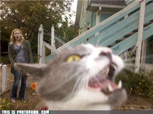 Animal Bomb best of week cat Chuck Testa do not want nope outta this place - 5261208320