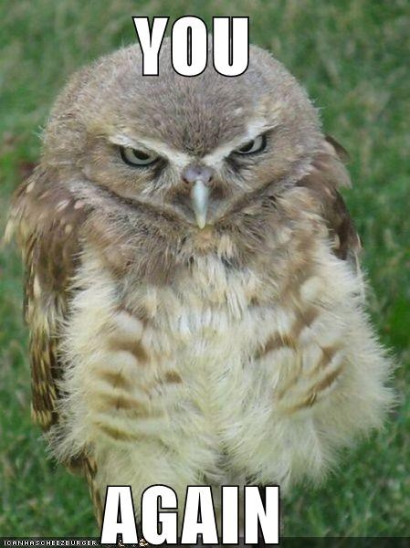 angry animals gtfo irritated Owl stfu you again - 5261588992
