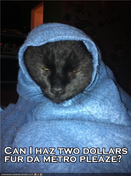 begging blankets Cats hobos homeless I Can Has Cheezburger metro money poor - 5261984000