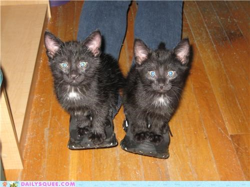 adorable,cat,Cats,feet,Hall of Fame,kitten,reader squees,slippers,standing