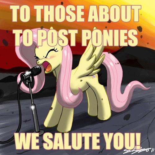 ponies fluttershy - 5262740992