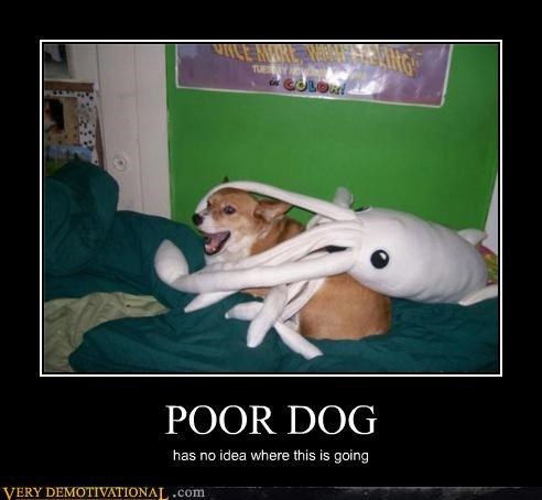 corgie hilarious poor dog sexy times tentacles - 5262792192