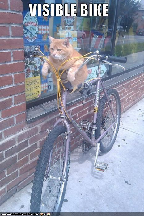 bike cat I Can Has Cheezburger invisible invisible bike visible bike - 5262913536