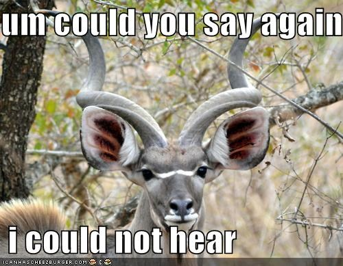 big ears deer ears i-cant-hear-you repeat repeat yourself what - 5262984192