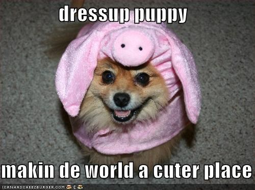 costume cute dress up halloween halloween 2011 howl-o-ween pig pomeranian - 5263122688