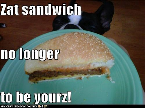 Cheezburger Image 5263945472