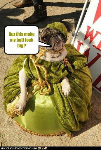 Cheezburger Image 5264207872