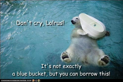 animals blue bucket bukkit lolrus polar bear sharing is caring - 5264318208