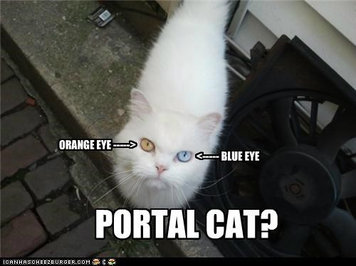 blue caption captioned cat colors eye eyes orange Portal - 5264453632