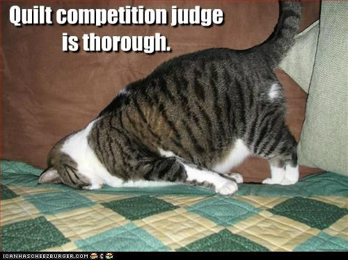 blanket,caption,Cats,competition,face,judge,quilt,quilts,smush,thorough