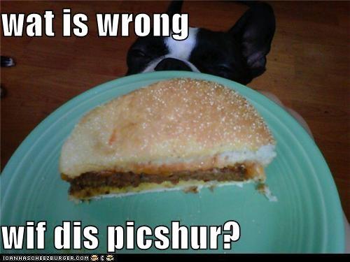 Cheezburger Image 5265361664