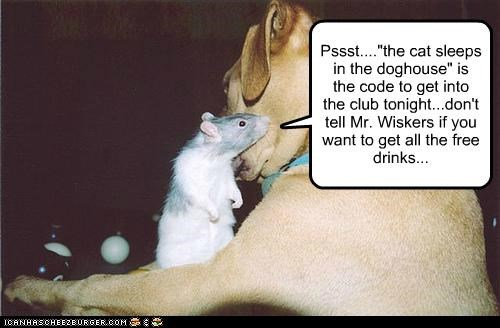 club,clubbin,dancing,friends,pass code,pit bull,pitbull,rat,secret,secret phrase,up in da club,whatbreed
